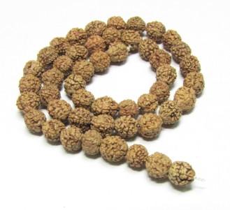 Rudraksha Seeds